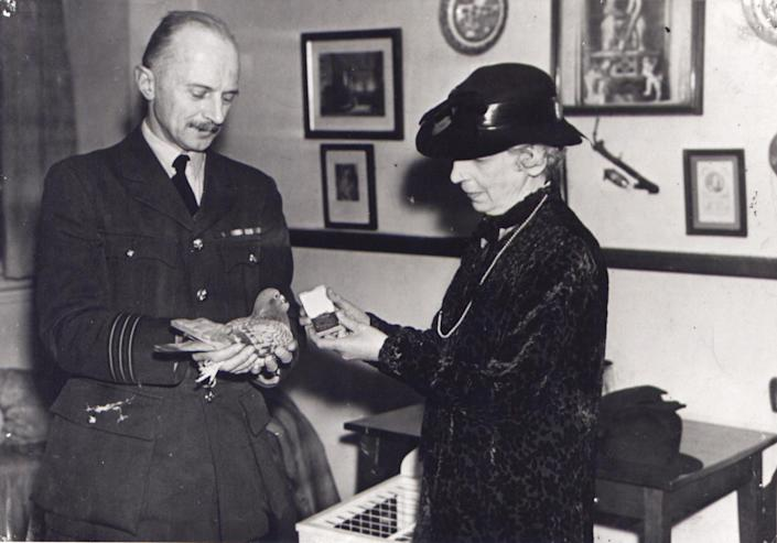 In this photo released Thursday Oct. 25, 2012 by The People's Dispensary for Sick Animals (PDSA) who are the awarding body responsible for the Dickin Medal for animal gallantry. Winkie the pigeon is presented with the Dickin Medal for animal gallantry, by PDSA founder Maria Dickin, with Wing Commander Lea Rayner on December 2, 1943. The latest animal to receive the Dickin Medal is announced Thursday Oct. 25, 2012, a bomb-sniffing army springer-spaniel dog named Theo, who died in Afghanistan on the day his handler was killed has been posthumously honored with the Dikin Medal, Britain's highest award for animal bravery, during a ceremony in London Thursday Oct. 25, 2012. Theo worked for five months in Afghanistan with Royal Army Veterinary Corps Lance Cpl. Liam Tasker, searching out roadside bombs, but Tasker was killed in a firefight with insurgents in Helmand Province in March 2011, and Theo the dog died hours later. (AP Photo)