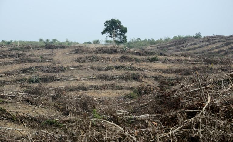 A forest that was cleared to plant oil palm trees in Jambi, south Sumatra
