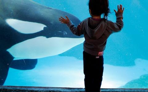 An ethical debate over keeping such animals in captivity has prompted action in recent years - Credit: AP