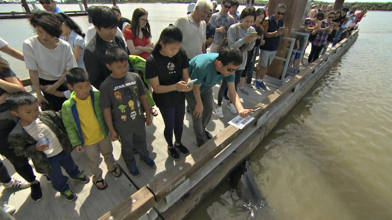 Extremely frustrating to see crowds where sea lion grabbed girl says expert