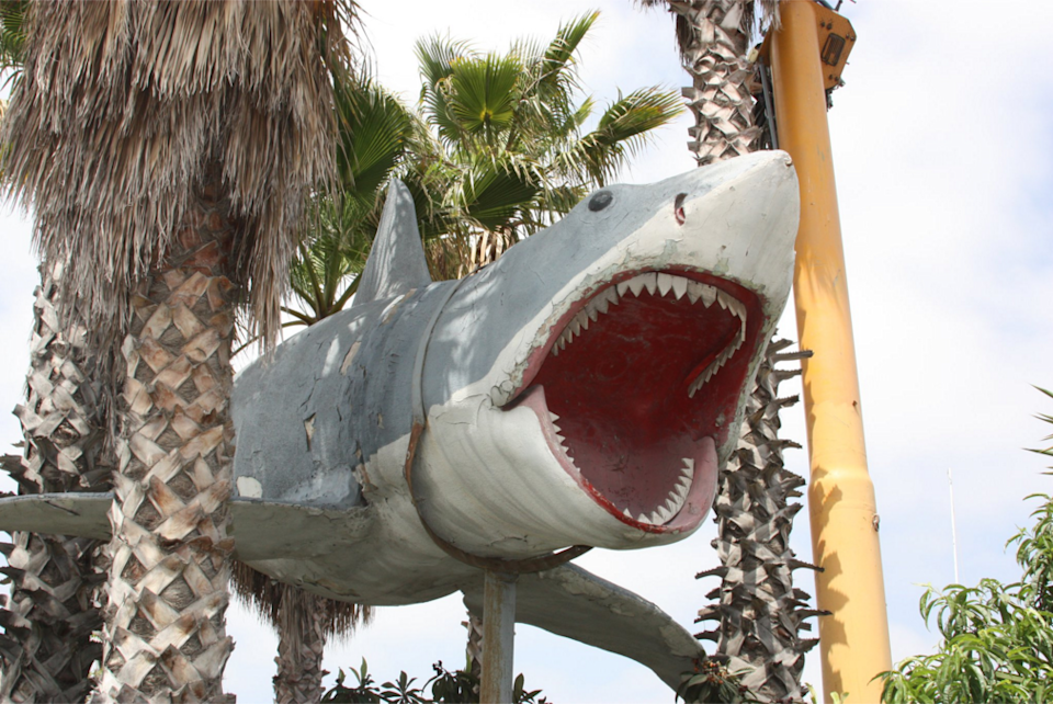 Last Surviving Jaws Shark Hooked Academy To Display Model In New Museum