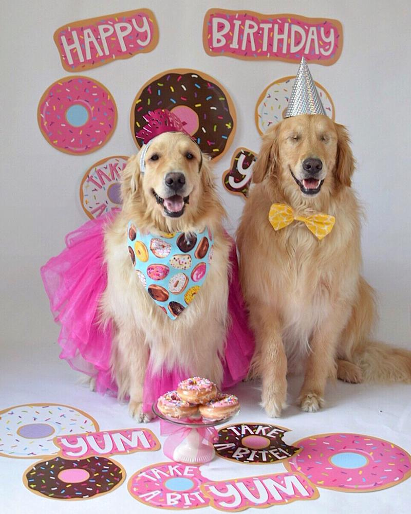 Party animals: Addie and Jake do everything together (Picture: Caters)