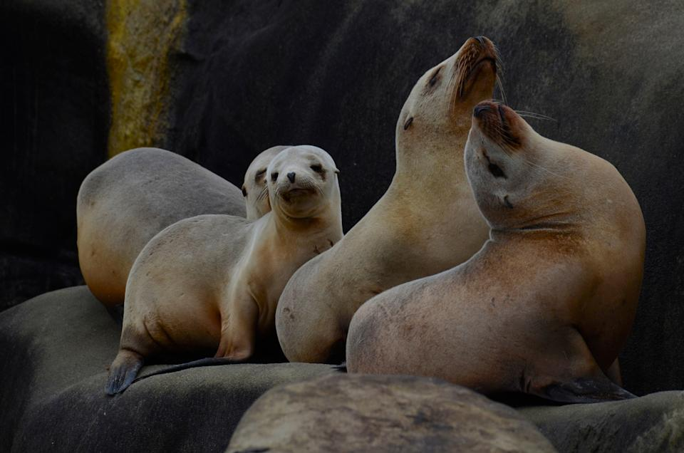 Sea lions in the Galapagos - getty