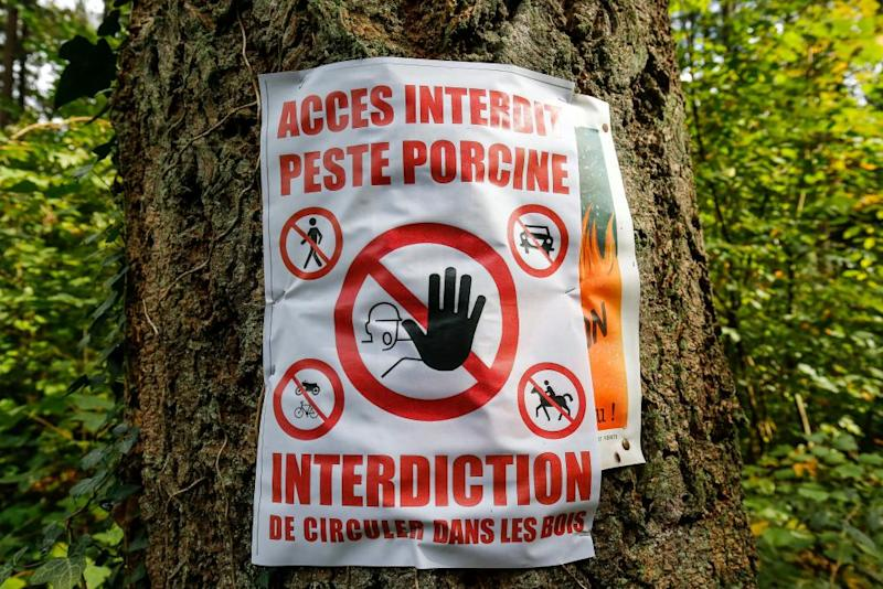 A placard reading 'Access not allowed, African swine fever' is fixed next to a path in a wood near Tintigny, southern Belgium, 21 September 2018.