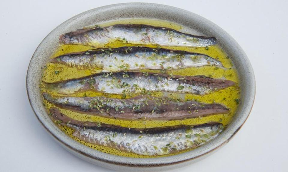 'These are butch, muscular specimens, the Schwarzeneggers of the anchovy world': anchovies.