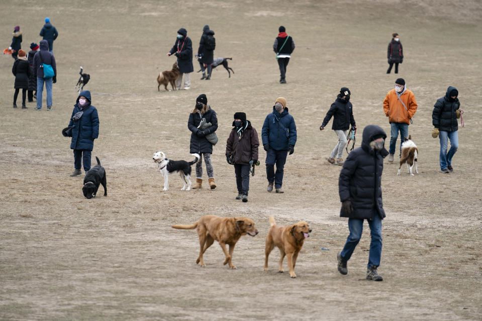 Dogs and their owners play in Prospect Park's Long Meadow during off-leash hours, Sunday, Jan. 31, 2021, in the Brooklyn borough of New York. Go to any dog park right now and you'll probably find lively pandemic puppies, along with new owners learning the ins and outs of off-leash play. One of the silver linings of the pandemic is that many people are discovering the joys of dog ownership. AP Photo/John Minchillo)
