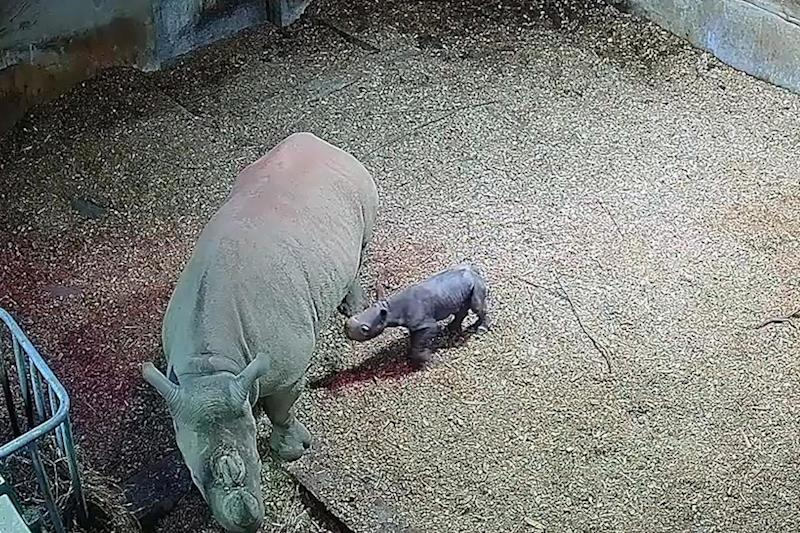 The baby rhino has yet to be named: Folly Farm