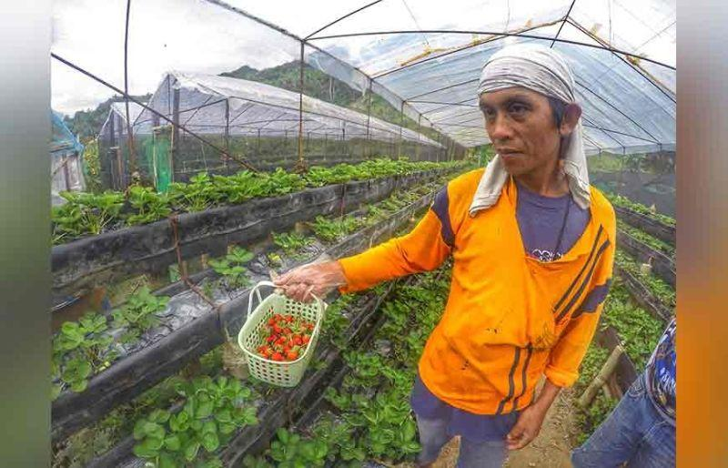 Farm tourism catches attention of OFWs