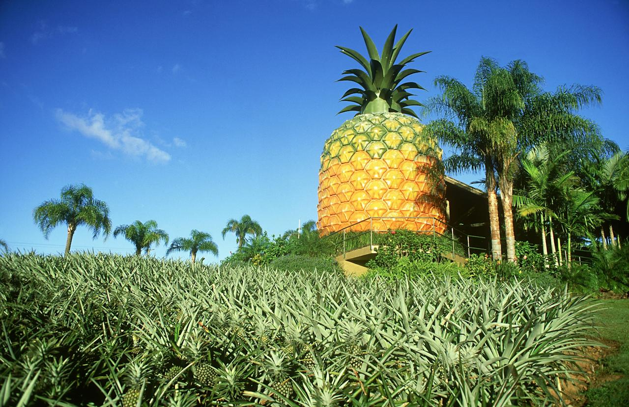 """Brace yourself for the world's largest pineapple building at 56 feet tall in Bathurst, South Africa. (Don't confuse it with Australia's version—South Africa's is slightly taller.) The structure is a testament to Bathurst's sustainable production process. The area is populated by smallholder farmers who account for <a href=""""https://www.farmersweekly.co.za/crops/field-crops/how-a-small-farmer-became-sas-biggest-pineapple-producer/"""">70% of the country's pineapple</a> production. In Bathurst, some pineapples can only be harvested twice in five years, which is too long a gap for a company to scale. Nevertheless, these South African pineapples are cared for by family-owned farms, resulting in more flavorful produce. On the ground floor of the 56-foot-tall monument is a museum highlighting its history along with a gift shop selling a variety of pineapple products. For those who want to visit, <a href=""""https://www.sa-venues.com/things-to-do/easterncape/visit-the-biggest-pineapple-in-the-world/"""">it's open from 9 to 5 a.m. daily</a>."""