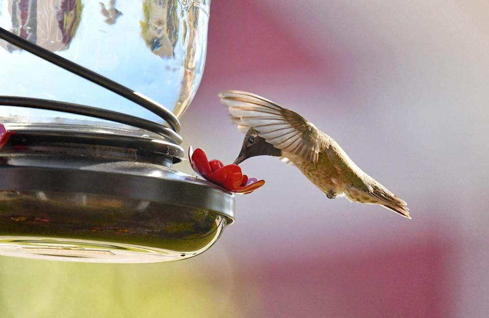 """<p>As we head into spring and summer, we have begun to anticipate the return of some of our favorite tiny feathered friends: hummingbirds. We love luring these fascinating creatures into our yards summer after summer. As most enthusiasts know, hummingbirds prefer <a href=""""https://www.shopterrain.com/products/hummingbird-nectar-concentrate"""" rel=""""nofollow noopener"""" target=""""_blank"""" data-ylk=""""slk:nectar"""" class=""""link rapid-noclick-resp"""">nectar</a> more than the birdseed that you might already have on hand. Luckily, it's super easy to make your own nectar from granulated sugar, which you probably already have in your kitchen. <br></p><p>After that's taken care of, it's time to find just the right feeder. We have gathered up some options, all of them available online, for your perusal. After you've made your selection, choose a spot in your garden that has partial shade to hang the feeder. Once you fill the feeder with the nectar, sit back and wait to be entertained by these pleasant little pollinators. But there's more than one way to attract a hummingbird! Make your garden a true hummingbird paradise by planting <u><a href=""""https://www.countryliving.com/gardening/g32196978/flowers-that-attract-hummingbirds/"""" rel=""""nofollow noopener"""" target=""""_blank"""" data-ylk=""""slk:flowers that attract hummingbirds"""" class=""""link rapid-noclick-resp"""">flowers that attract hummingbirds</a></u>. Once you've got the hummingbirds stopping by, you may want to attract a few more types of birds to the mix. Try crafting some <a href=""""https://www.countryliving.com/diy-crafts/how-to/g3060/diy-bird-feeders/"""" rel=""""nofollow noopener"""" target=""""_blank"""" data-ylk=""""slk:DIY bird feeders"""" class=""""link rapid-noclick-resp"""">DIY bird feeders</a> or purchase a ready-made <a href=""""https://www.countryliving.com/shopping/a29389304/country-store-birdhouse/"""" rel=""""nofollow noopener"""" target=""""_blank"""" data-ylk=""""slk:Country Store Birdhouse"""" class=""""link rapid-noclick-resp"""">Country Store Birdhouse</a>. When you're all set up, grab th"""