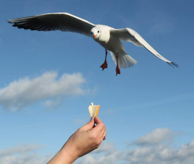 New fines have come into force for people feeding seagulls