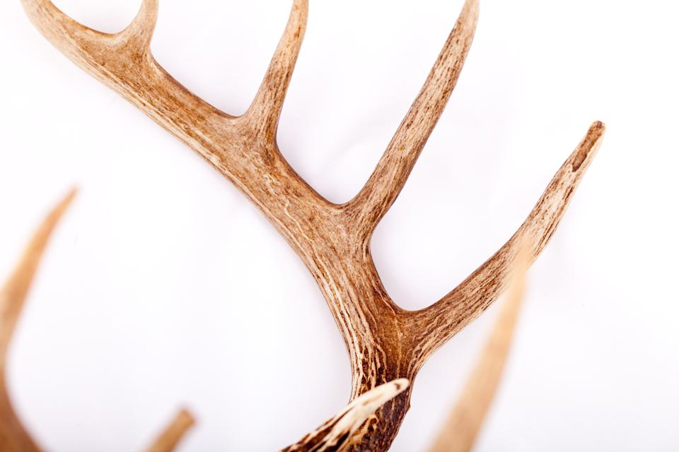 Man Who Pierced Ex Colleague S Eye Socket With Antlers While In Moving Vehicle Jailed