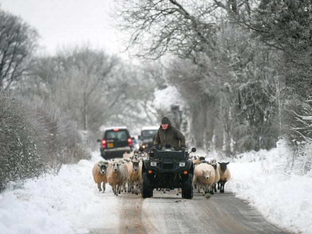 Sheep are driven to another field in the Cotswolds (PA)
