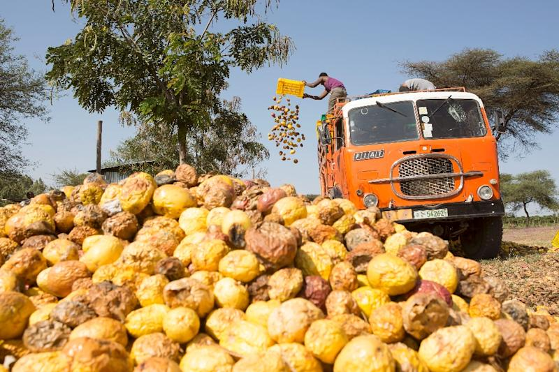 Workers of AfricaJuice had to toss several tonnes of passion fruit that could no longer be processed after the farm was attacked by protesters (AFP Photo/Zacharias Abubeker)