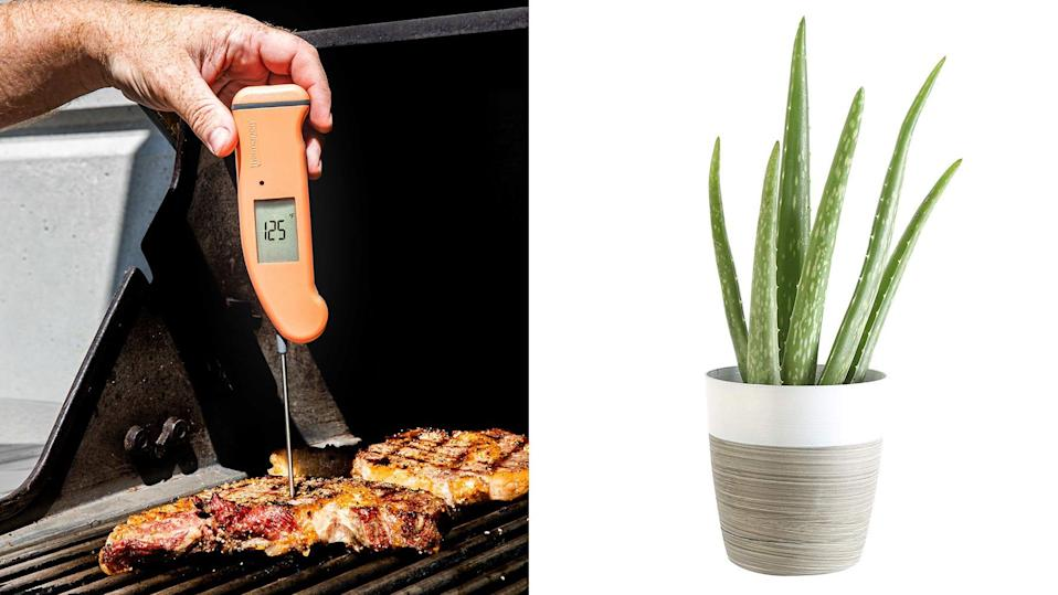 This Thursday, save on live plants, Anthropologie sale items, meat thermometers, and more online.