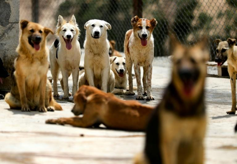 As many families struggle to stay afloat, activists say increasingly more pet owners are asking for help to feed or re-home their animals