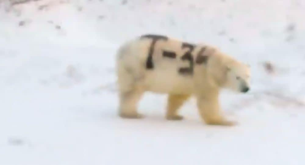 Spray-painted polar bear in Russia | Sergey Kavry/Facebook