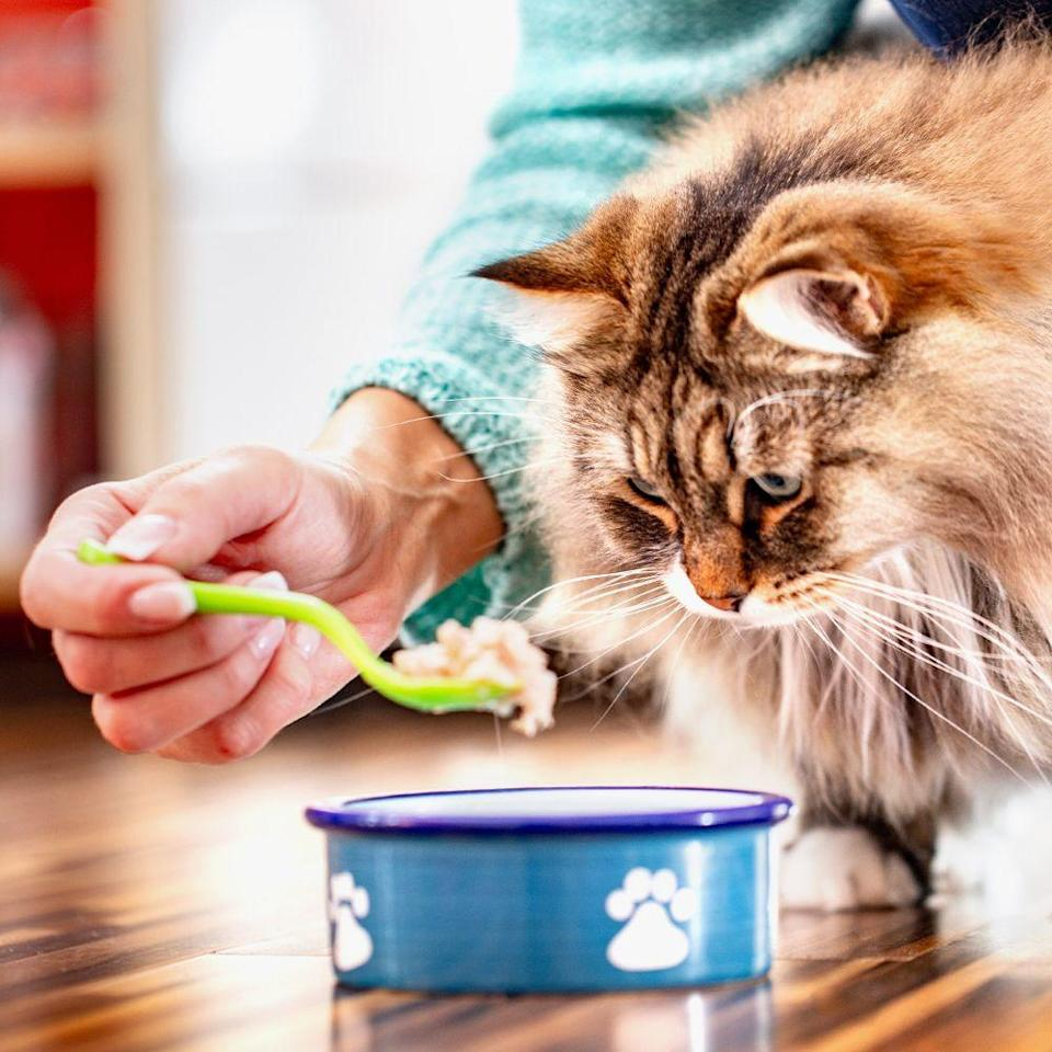 <p>Most grocery stores are stocked with pet food you can give to your furry best friends, but it typically isn't the high-quality chow you might expect. Your best bet would be to pick up your typical brand from the pet store so you don't upset your pup's tummy with lower-quality food. </p>