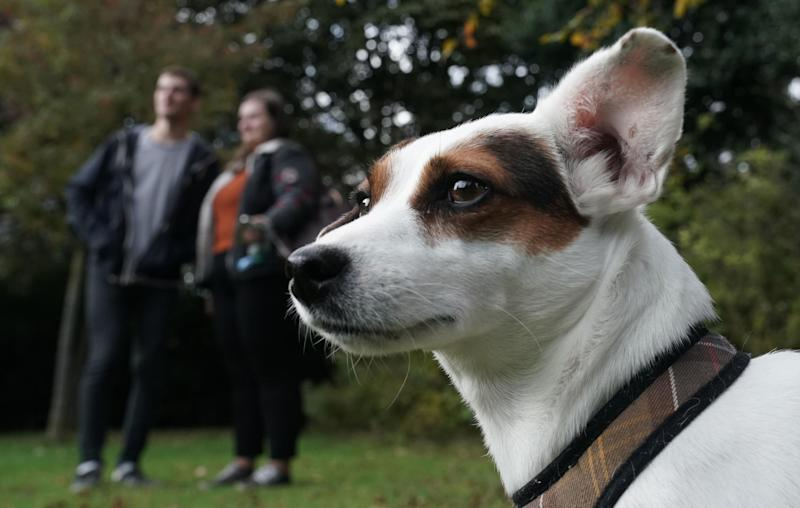 Bessie, a three-year-old Jack Russell who is joining the fight to help students at Newcastle University with their mental health: PA
