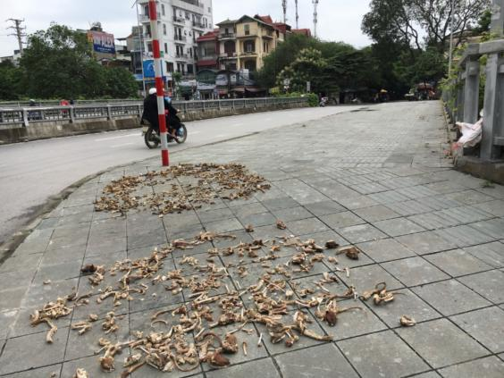 Piles of cat bones spotted on a pavement (Four Paws)