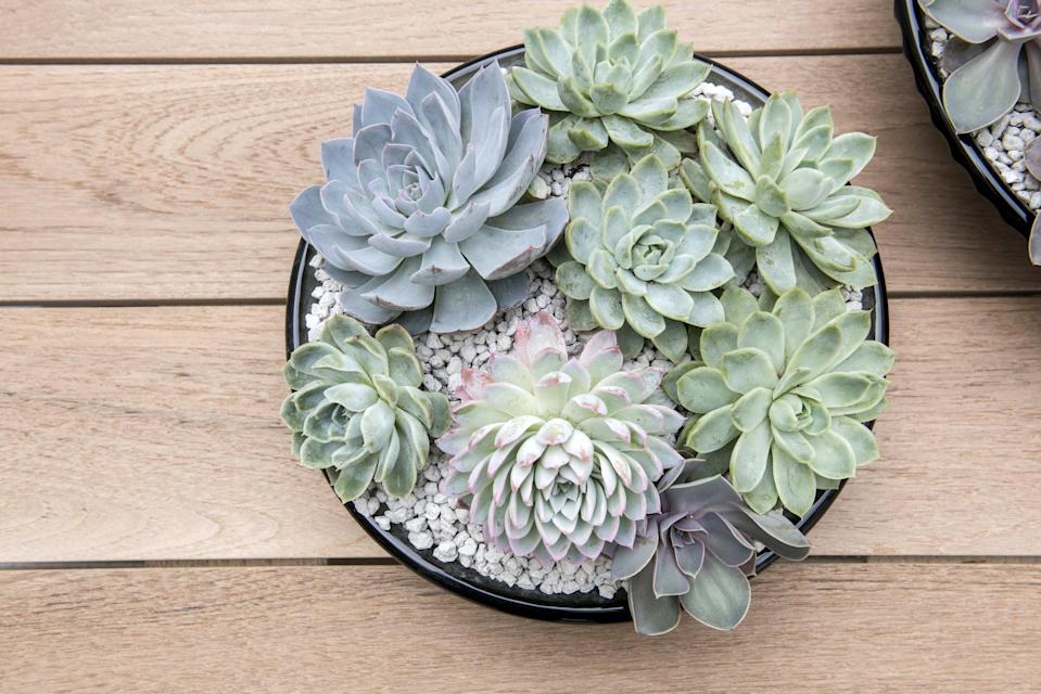 <p>If you've tried and tried but just can't figure out the right amount of water for your plant, consider putting some pebbles in the bottom of your planter. The pebbles will keep the roots raised and away from any water that pools at the bottom of the container after watering. It's an easy fix to a very common problem. Your plants will be less likely to get root rot and will be happier and healthier!</p>