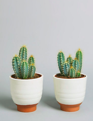 "<h3>M&S Cacti Ceramic</h3><p>What's better than a couple of small cacti plants? A couple of plants in adorable pots of course. Show off a little style at your desk with these two low-maintenance cuties.</p><p><strong>Size:</strong> 26cm (including pot)</p><br><br><strong>Marks & Spencer</strong> Cacti Ceramic, $30, available at <a href=""https://www.marksandspencer.com/cacti-ceramic-available-for-delivery-from-25th-april-2019-/p/p60285244?extid=ps_gglpla_Flowers%20&%20Plants&gclsrc=aw.ds&&gclid=EAIaIQobChMI4_DBtJqv4wIV1OFRCh0YRgrJEAQYCSABEgKtGvD_BwE"" rel=""nofollow noopener"" target=""_blank"" data-ylk=""slk:Marks & Spencer"" class=""link rapid-noclick-resp"">Marks & Spencer</a>"