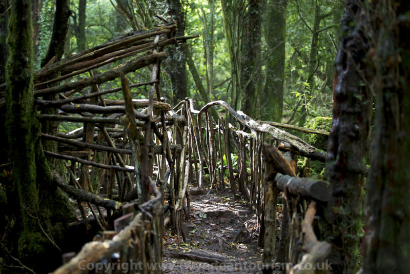 One of the wooden bridges at Puzzlewood in Forest of Dean & Wye Valley