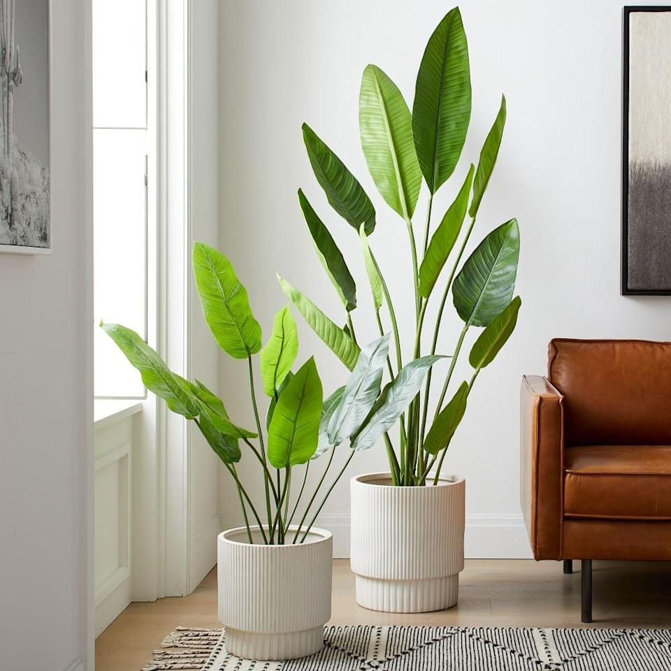 <p>If you've never had any luck keeping your real Bird of Paradise plants alive, try this <span>Faux Potted Bird of Paradise Plant</span> ($200).</p>