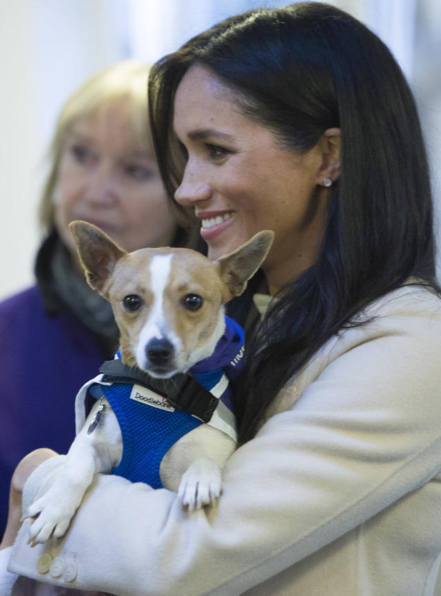 """Meghan meets a Jack Russell dog named """"Minnie"""" during her visit to the animal welfare charity Mayhew in 2019. (Getty Images)"""