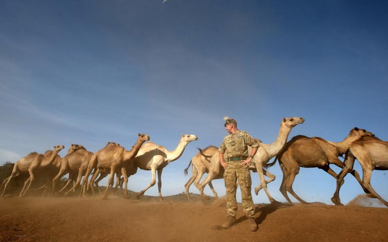 A soldier from 2nd Bn The Royal Regiment of Scotland watches as camels pass during Exercise Askari Storm in 2015 - PA