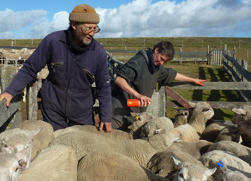 Nick Pitaluga, left, and his wife Annie work on their sheep farm in Salvador, Falkland Islands, Thursday March 8, 2012.  The sheep farm has been in Pitaluga's family since it was started by his great-great grandfather Andrez Pitaluga, one of the earliest arrivals to the islands after Britain took control in 1833. (AP Photo/Michael Warren)
