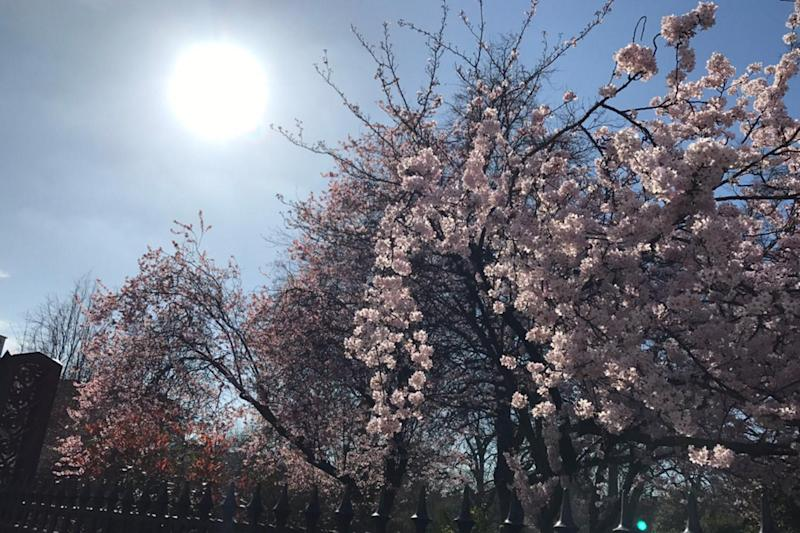 Sunshine: Londoners enjoyed an unseasonably warm March day: Ross Renton