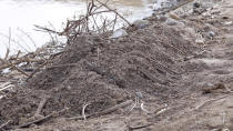 A fresh grave covered in sticks beside the Setit river at Wad el Hilu, Sudan on Wednesday, Aug. 4, 2021. Dozens of bodies have been found floating down the Setit River, known in Ethiopia as Tekeze River, in southwestern Sudan in the past week. (AP Photo/Mohaned Awad)