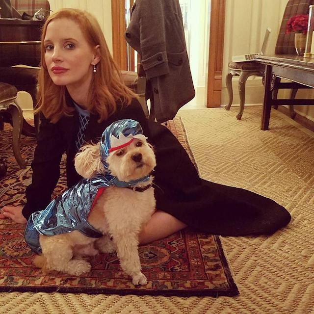 "<p>The actress turned her favorite canine, three-legged dog Chaplin, into a superhero: ""Halloween game faces."" (Photo: <a href=""https://www.instagram.com/p/BMH2z-wB0jJ/?taken-by=jessicachastain&hl=en"" rel=""nofollow noopener"" target=""_blank"" data-ylk=""slk:Instagram"" class=""link rapid-noclick-resp"">Instagram</a>) </p>"