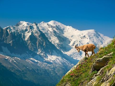 Ibex Mont Blanc - Credit: Getty