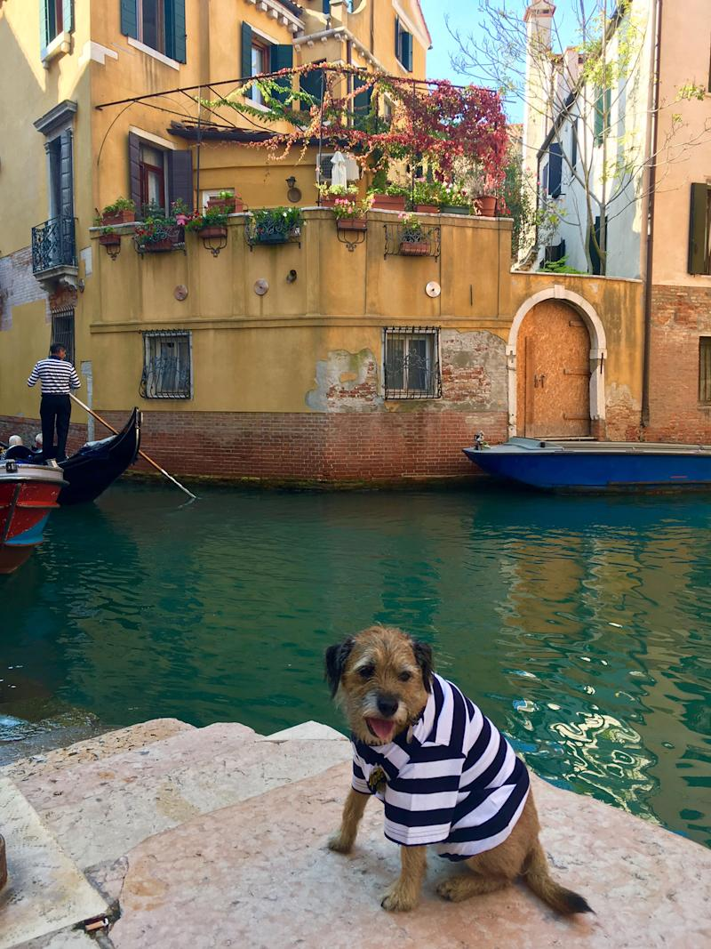 Pete the border terrier in Venice, Italy. (Photo: Caters News)