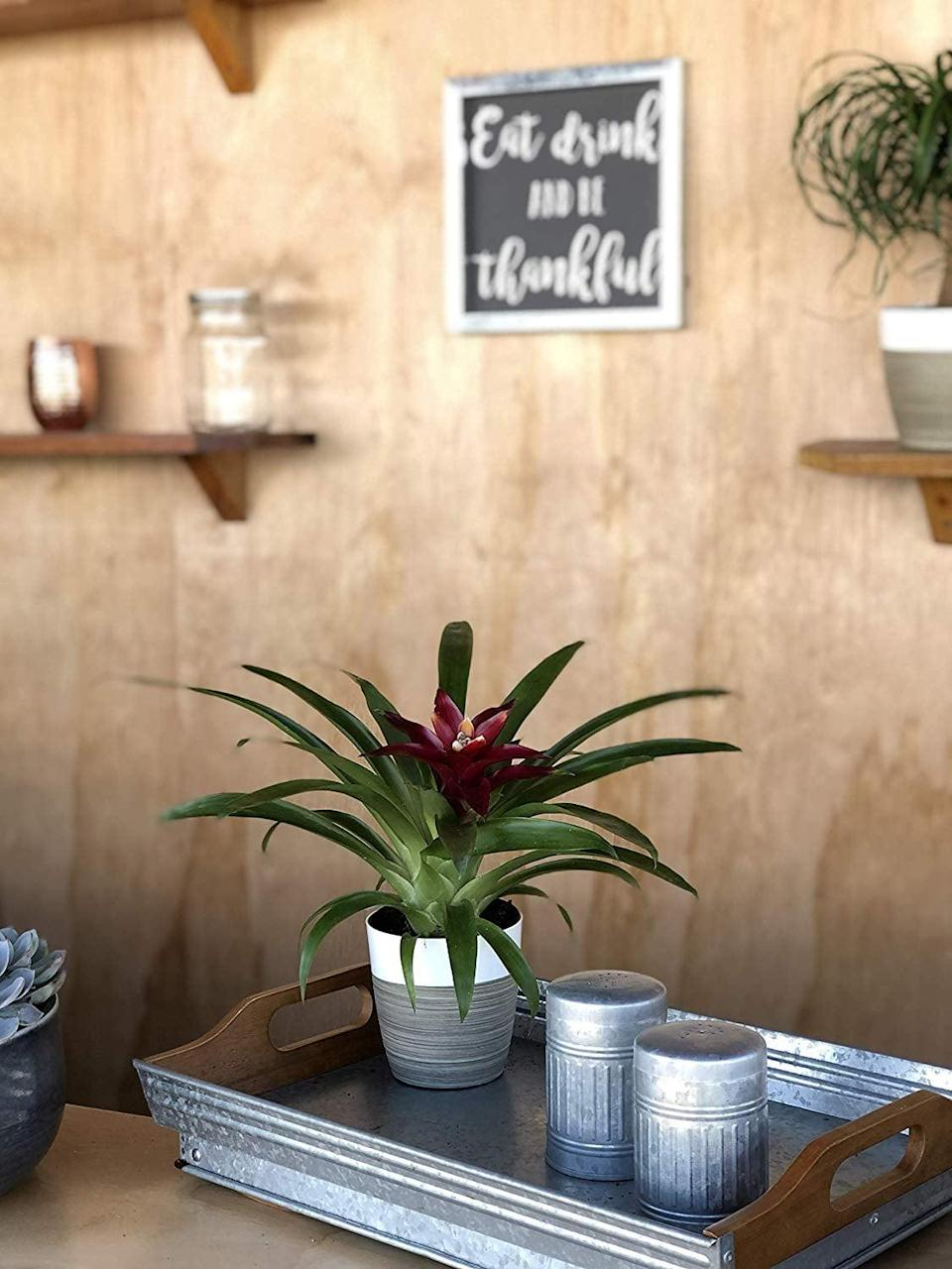 """<p>The <a href=""""https://www.popsugar.com/buy/Costa-Farms-Flowering-Bromeliad-Indoor-Plant-444302?p_name=Costa%20Farms%20Flowering%20Bromeliad%20Indoor%20Plant&retailer=amazon.com&pid=444302&price=21&evar1=casa%3Aus&evar9=46127505&evar98=https%3A%2F%2Fwww.popsugar.com%2Fhome%2Fphoto-gallery%2F46127505%2Fimage%2F46128480%2FCosta-Farms-Flowering-Bromeliad-Indoor-Plant&list1=shopping%2Cgift%20guide%2Cflowers%2Chouse%20plants%2Cplants%2Cmothers%20day%2Cgifts%20for%20women&prop13=api&pdata=1"""" class=""""link rapid-noclick-resp"""" rel=""""nofollow noopener"""" target=""""_blank"""" data-ylk=""""slk:Costa Farms Flowering Bromeliad Indoor Plant"""">Costa Farms Flowering Bromeliad Indoor Plant </a> ($21) is an awesome gift as it can last for years and flaunts a gorgeous flower in the middle.</p>"""