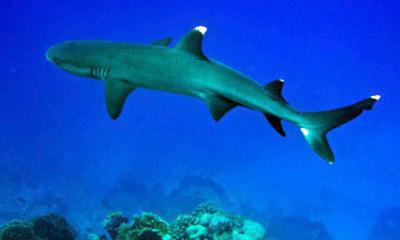 Feared 'Deadly Shark' Spotted Off Cornwall