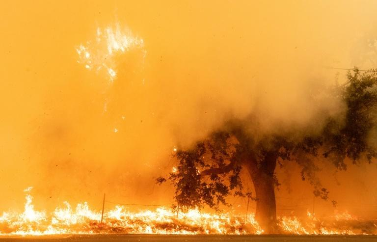 Flames and smoke overtake a tree as the LNU Lightning Complex fire continues to spread in Fairfield, California on August 19, 2020