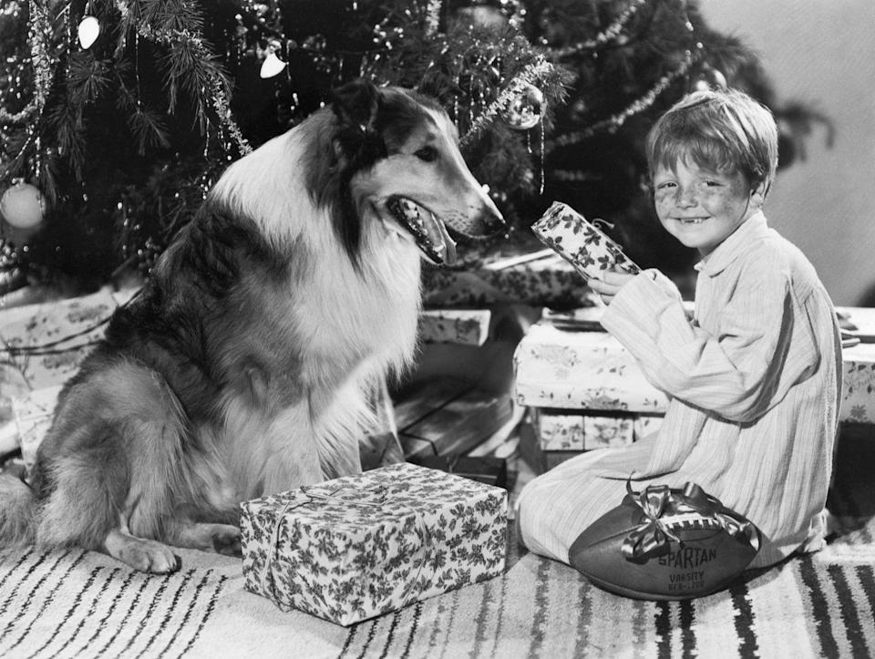 <p>Child actor Butch Jenkins flashes a smile while reenacting Christmas morning cheer with Lassie. </p>