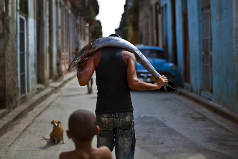 A man carries a freshly caught fish on his back to sell in Old Havana, Cuba, Saturday, Oct. 20, 2012. On Sunday, Cubans will cast ballots to choose among candidates for municipal assemblies that administer local governments and relay complaints on issues such as potholes and housing, social and sports programs. (AP Photo/Ramon Espinosa)