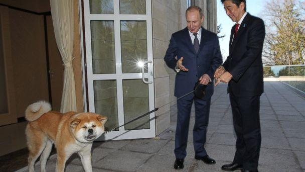 GTY vladimir putin yume shinzo abe jt 140208 16x9 608 Amid Uproar Over Stray Cull, Putin Brought His Own Dog to Sochi