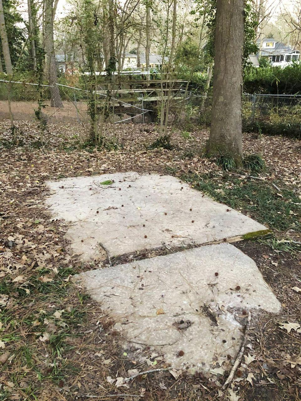 <p>A set of disregarded concrete pads sat unused in the wild and overgrown yard.</p>