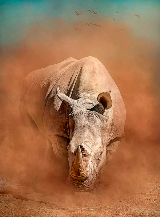 <p>A red dust storm gives way to this impressive rhino. (Pic: Sheri Emerson/SWNS) </p>