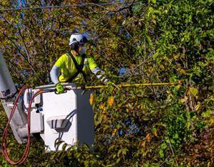In areas where tree trimming has been completed communities have experienced, on average, 60% fewer outages.    DTE tree trimmers are trained in national safety practices through an International Brotherhood of Electrical Workers apprenticeship program. Training includes tree identification, tree health, climbing, machine management, ground support, and electric hazard awareness.