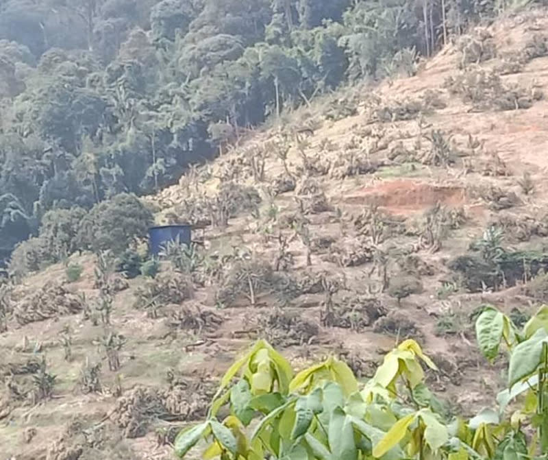 The Pahang State Forestry Department destroyed about 15,000 durian trees in Hutan Simpanan Batu Talam within nine days. — Picture courtesy of Samka