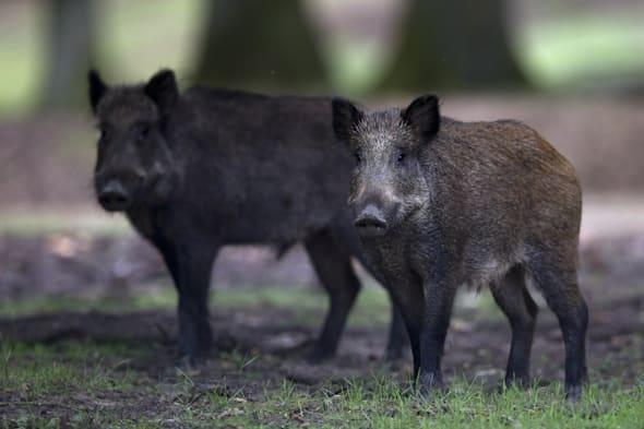 FRANCE-ANIMALS-ENVIRONMENT-FEATURE