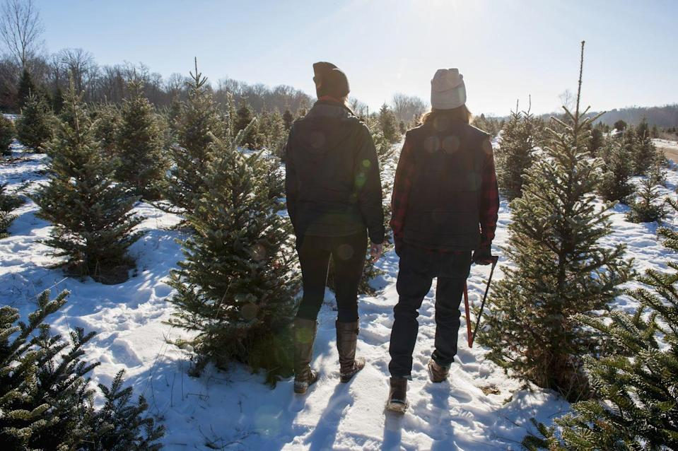 """<p><strong>Grass Valley, Nevada</strong></p><p><a href=""""http://www.mcburneytreefarm.com/"""" rel=""""nofollow noopener"""" target=""""_blank"""" data-ylk=""""slk:McBurney Christmas Tree Farm"""" class=""""link rapid-noclick-resp""""><strong>McBurney Christmas Tree Farm</strong></a> is one of the coziest places to visit in Nevada this winter. Along with your tree, expect to pick up freshly cut holly, sit by the campfire, and sip on a cup of coffee. Their website shows availability and pricing, so keep checking back for more info prior to your visit. </p>"""