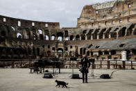 One of the famous Rome's cats passes by, as a concert for the reopening of ancient Colosseum is being presented Monday, Feb. 1, 2021, in a partial lifting of restriction measures aimed at containing the spread of COVID-19. Italy has eased its coronavirus restrictions Monday for most of the country downgrading Lazio and other regions from medium-risk orange zones to lower-risk yellow zones. (Cecilia Fabiano /LaPresse via AP)