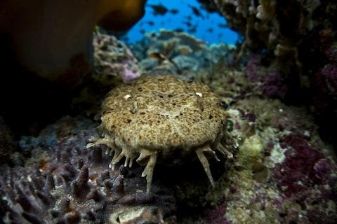 A wobbegong shark - Credit: GETTY